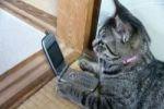 В России кошка набирала 04 и молчала в трубку