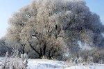 Россиянам рассказали о погоде на зиму