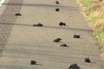 В США снова обнаружили погибших птиц