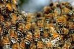 В Юте перевернулся грузовик с пчелами