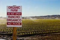 Спрос на биологически чистые продукты растет