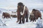 Уникальная находка ответила на вопрос - откуда у мамонтов горб?