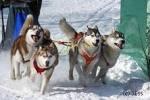 На Чукотке участники гонки на собачьих упряжках «Надежда» вышли на второй этап гонки