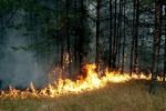 Хинганский заповедник охвачен пожарами