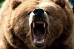 В Иркутской области медведь задрал человека