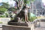 Японцы заявили, что Хатико девять лет ждал не хозяина, а вкусного угощения