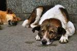 На юге Москвы обнаружена свалка погибших собак