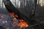 Настоящее тепло еще не пришло, а леса Сибири уже горят