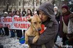 Зоозащитники просят владельцев собак быть настороже: у догхантеров появились новые способы отравления животных
