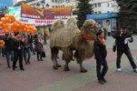 По главной улице с верблюдом