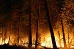 Из-за лесного пожара на складе боеприпасов в Забайкалье взорвались снаряды