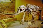Молодые американцы во время мальчишника откопали череп доисторического животного