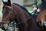 На Бородинском поле прошел Международный конный фестиваль
