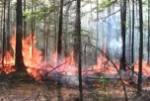 Леса в Якутии горят