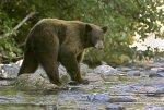 В Томской области медведь разорвал мужчину и покалечил женщину