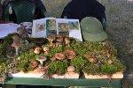 Со II фестиваля грибов «В Рязани грибы с глазами»