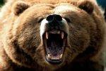 Охотник и медведь смертельно ранили друг друга