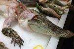 Россияне будут есть крокодилье мясо