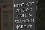 Минсельхоз заявил, что треть выращенных в России овощей просто «теряется»