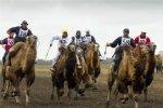 Под Астраханью прошли гонки на бактрианах