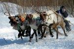 На Чукотке прошли гонки на оленьих упряжках