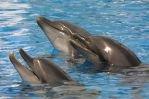 Люди пришли на помощь дельфину