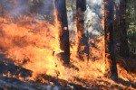 Площадь лесных пожаров в Сибири увеличивается