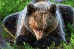 Личности мучителей медведя удалось установить