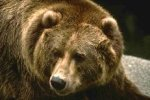 Человек медведю кто?