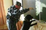 Учащихся в Петербурге проверяют на наркотики с привлечением собак
