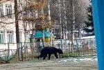 Медведь бродил возле детского сада