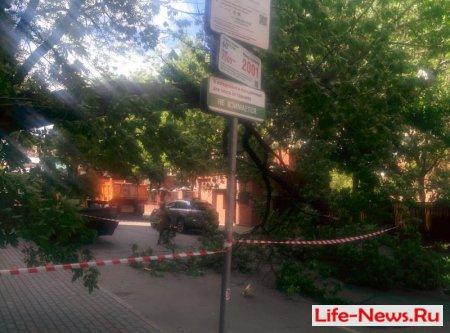 В центре Москвы перекрыто движение из-за упавшего днрева