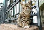 В Санкт-Петербурге отмечают День эрмитажного кота