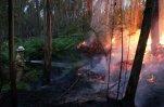 В Португалии не удается взять под контроль лесные пожары, гибнут люди