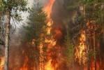 В Приморье продолжаются пожары