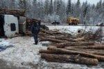 В Коми школьный автобус столкнулся с груженым лесовозом, есть жертвы