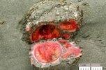 Неведомые обитатели морских глубин