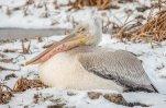 Перелетные птицы будут зимовать на Алтае