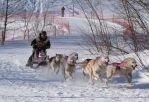 Завершилась супергонка на собачьих упряжках «Бегингия 2020». Часть 2