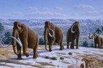 Успех интернационального коллектива ученых – получены первые мамонтята