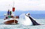 Туристический рай Гренландия