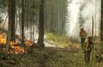 Ландшафтные пожары в Воронежской области